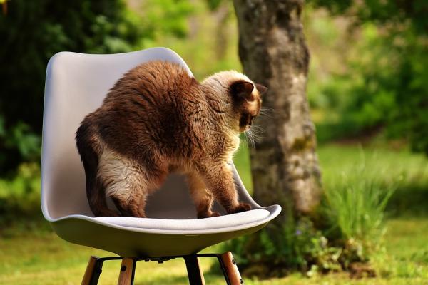 étirement du chat sur chaise